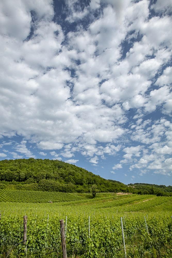 Walks among our vineyards
